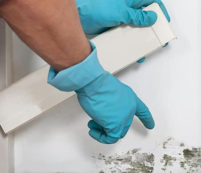 Do you have mold on your walls? Before