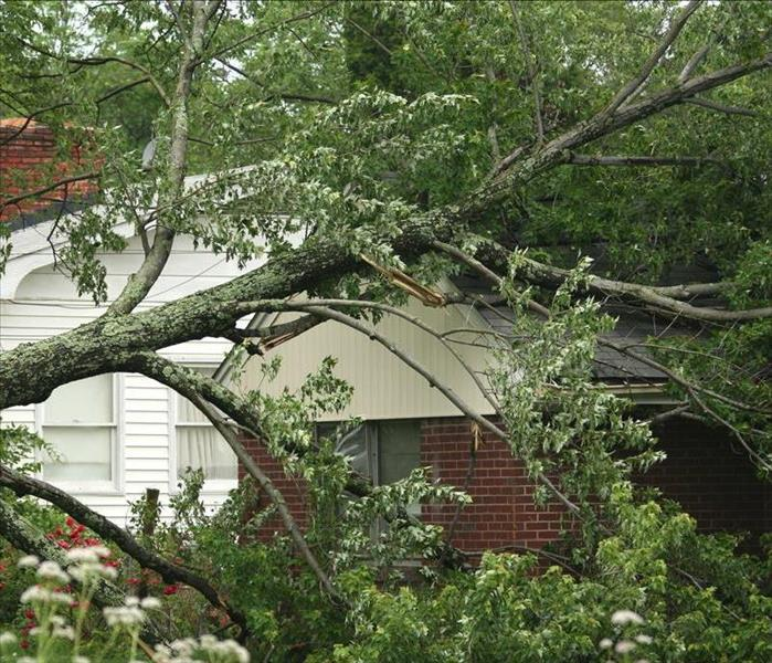 Large tree falls on roof of white one-story home