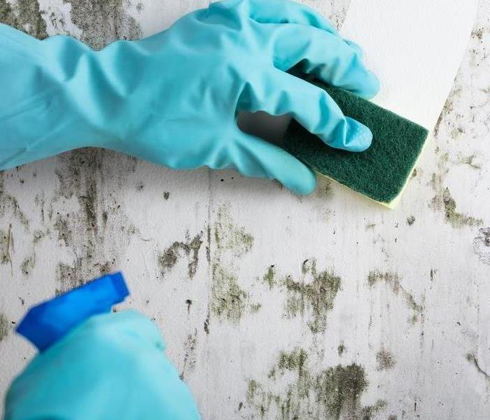 Mold Remediation Top Mistakes To Avoid When Cleaning Mold and Mildew